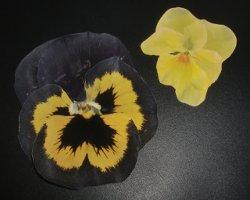 Bild von gepressten Blumen